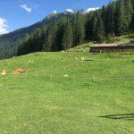 paesaggio di montagna con mucche e stalla