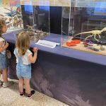 bambine che guardano reperti preistorici in una teca