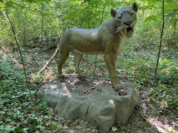 riproduzione di tigre dai denti a sciamola