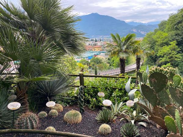 terrazza con piante grasse e vista panoramica su Riva del Garda