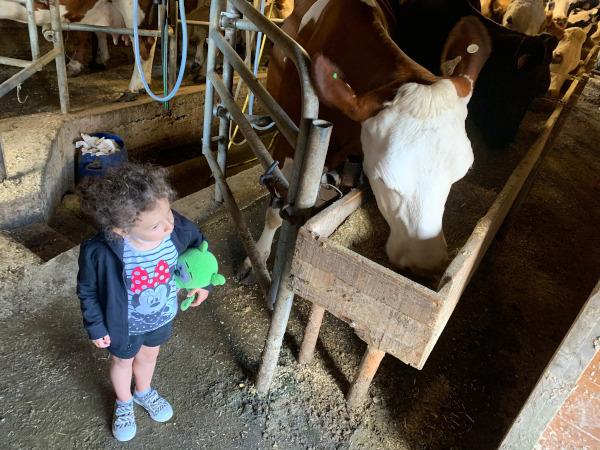 bambina che guarda la mucca mangiare