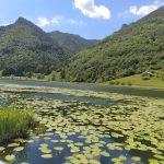 lago con ninfee