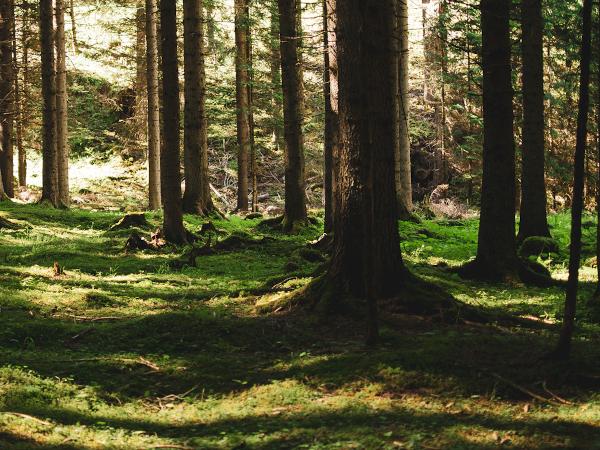 bosco con alberi e prato