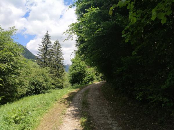 sentiero sterrato nel bosco