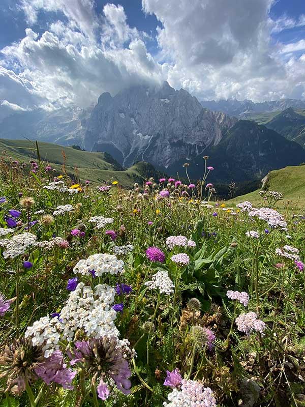 prato alpino con fiori