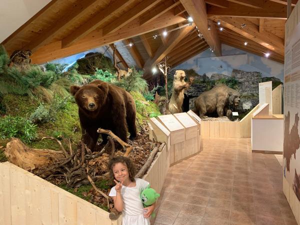riproduzione di bosco con orsi
