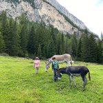 bambini i nprato alpino con asini