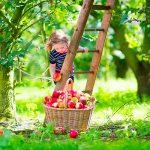 bimba raccoglie le mele