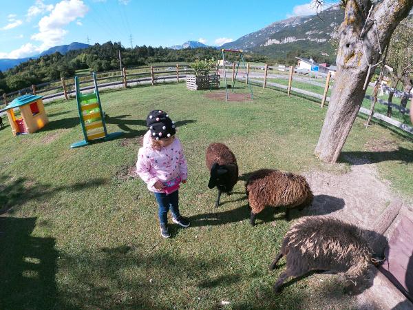 bambina in mezzo a pecore nere nane