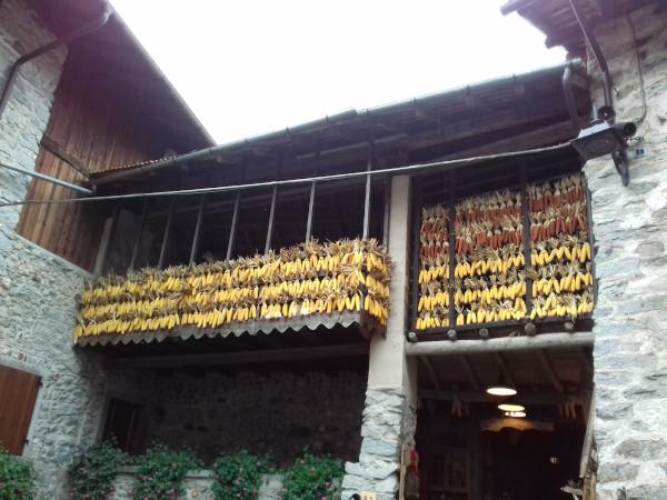 balcone con pannocchie appese