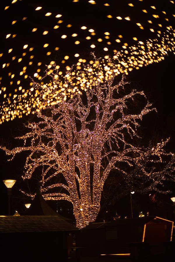 albero luci natale