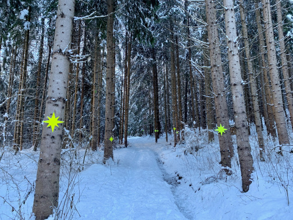 viale di alberi nel bosco con stelle gialle appese sui tronchi