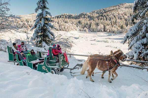 slitta con cavalli nella neve