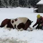 Charlotte Horse Riding in inverno