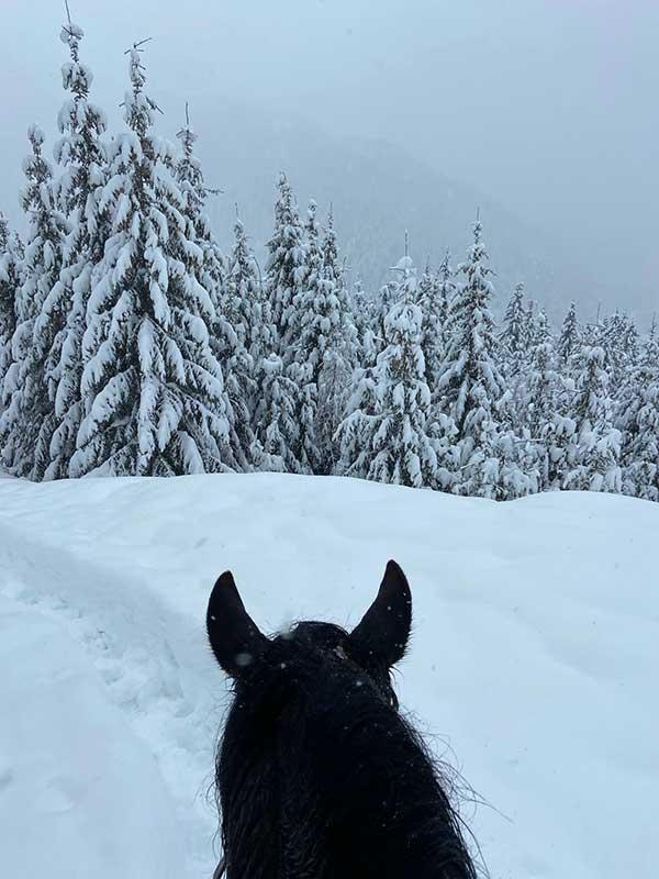 cavallo nelle neve