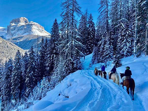 cavalli nella neve in trentino