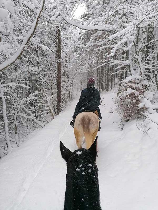 cavalli nella neve trentino