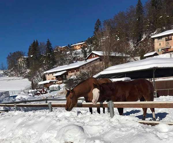 Cavalli nella neve coflari ranch