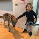 bambina vicino a lupo imbalsamato