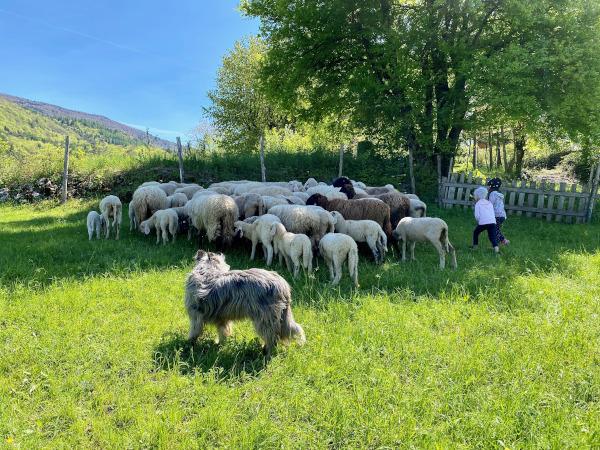 bambine vicino a gregge di pecore
