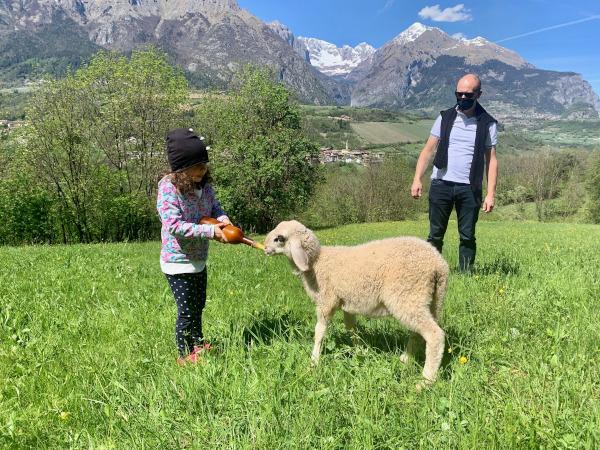 bambina che da il latte ad agnello