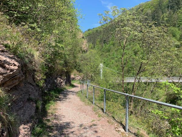sentiero nel verde con ponte