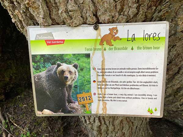 orso cartello
