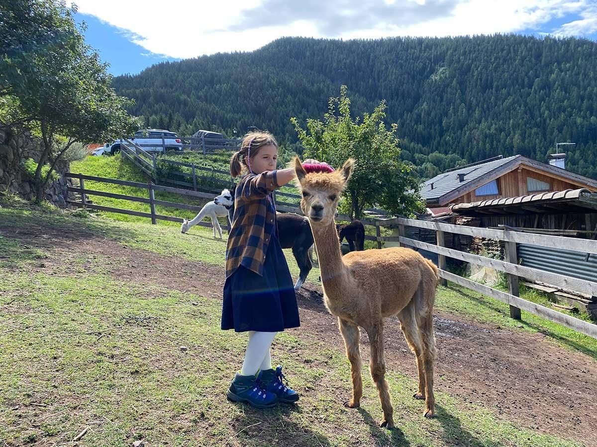 bambina alpaca