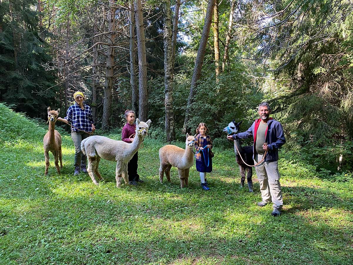 alpaca e bambini